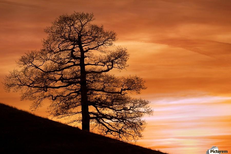 Tree Against A Sunset Sky, Nottinghamshire, England  Print