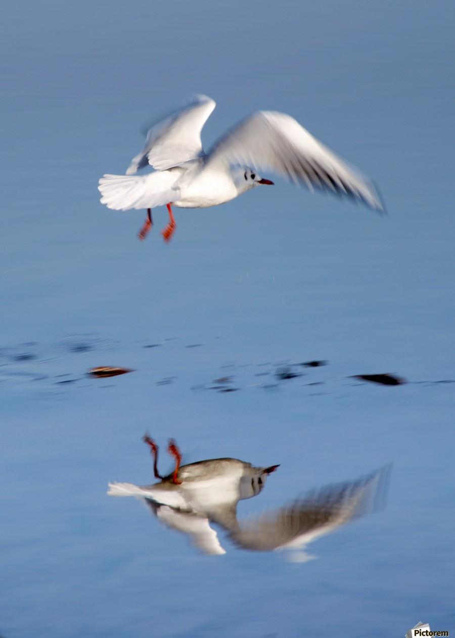 Bird Landing  Print