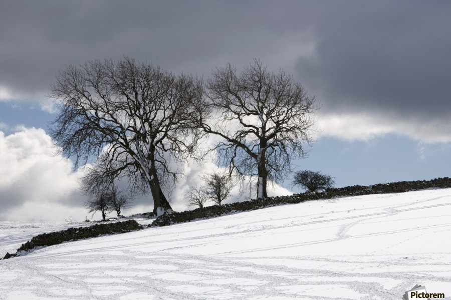 Snowy Field, Weardale, County Durham, England  Print