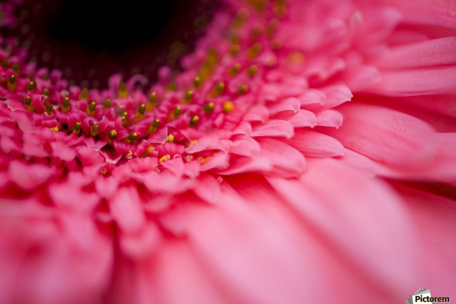 Close Up Of A Pink Flower  Print