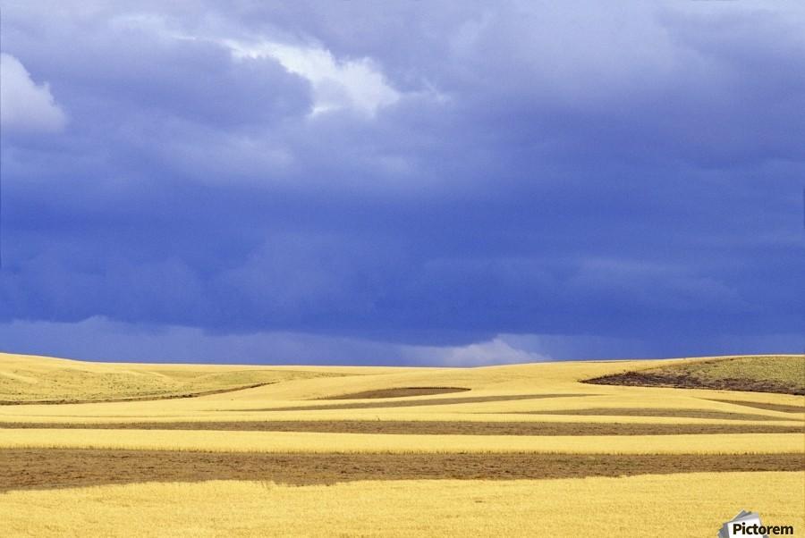 Wheat Fields Near Hermiston, Oregon, Usa  Print