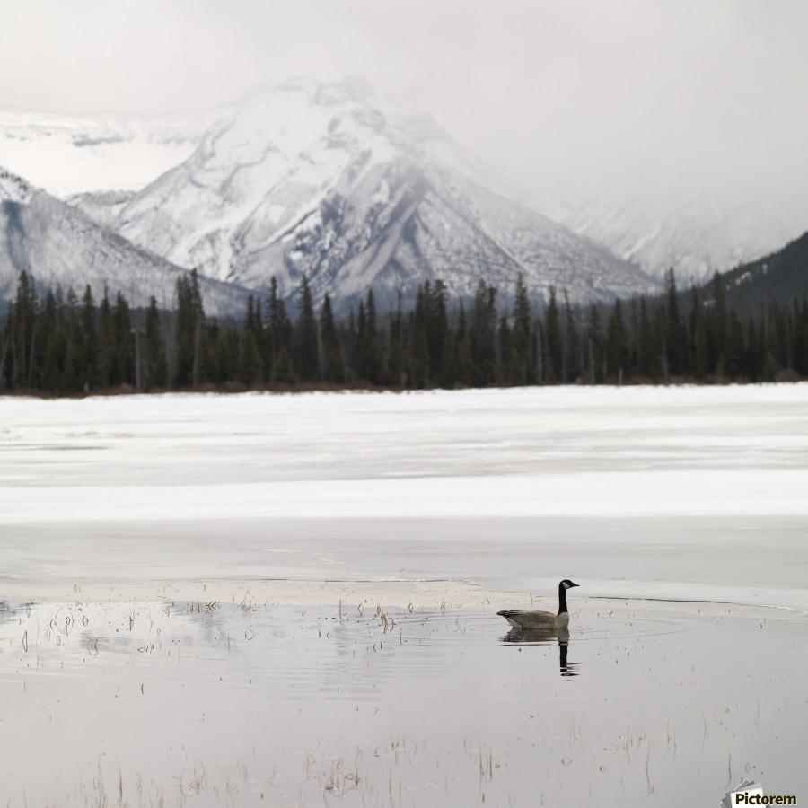 Winter Landscape, Banff National Park, Alberta, Canada  Print