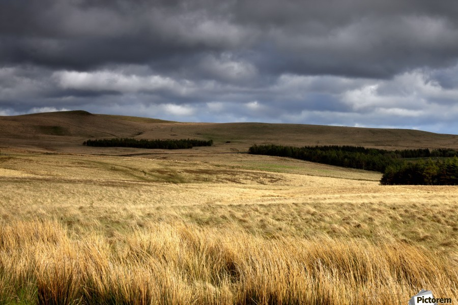 Field Of Wheat With Dark Clouds Overhead, Northumberland, England  Print