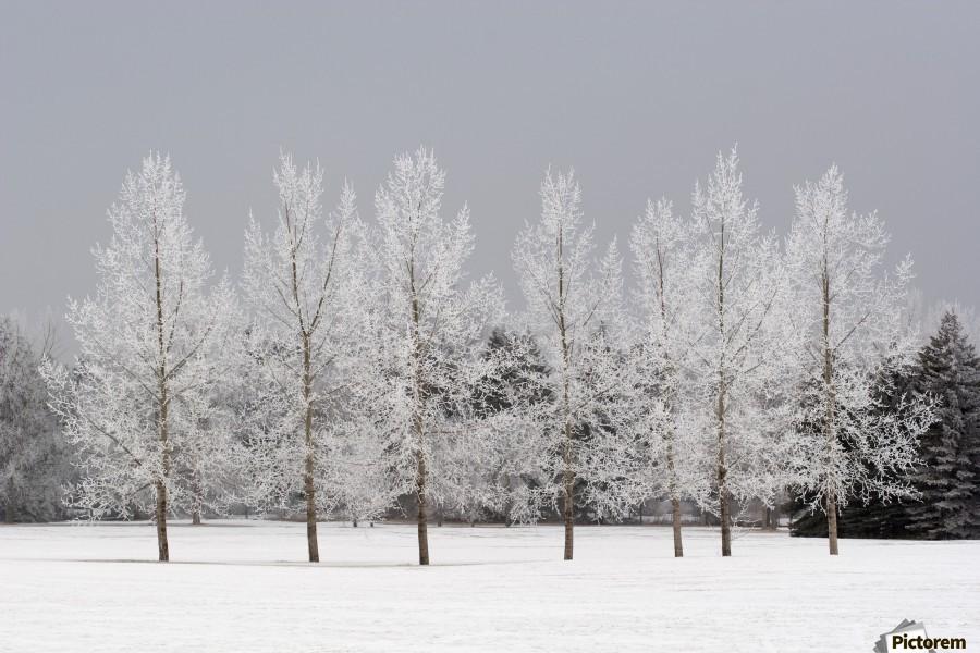 Winter, Calgary, Alberta, Canada  Print