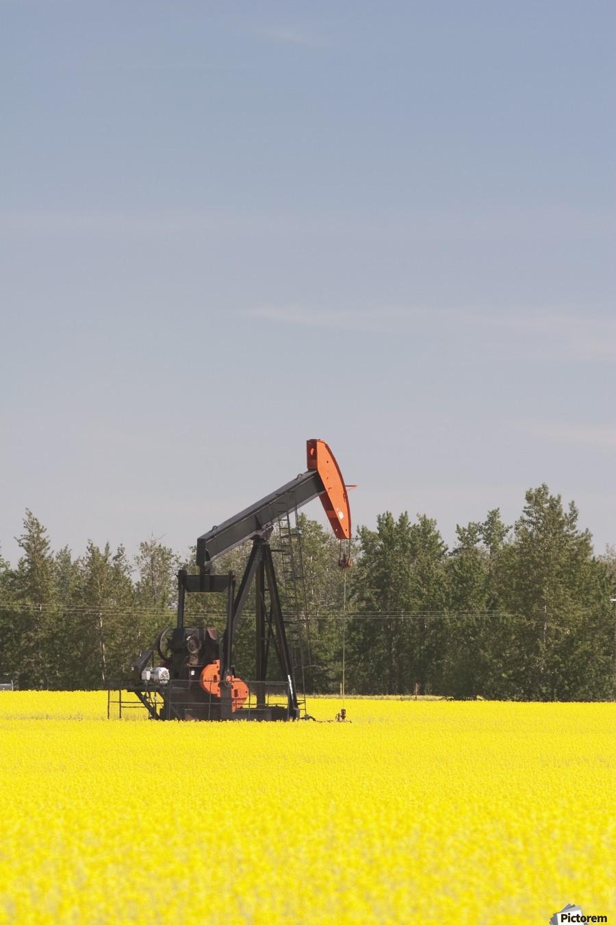 Alberta, Canada; Pump Jack In A Flowering Canola Field  Print