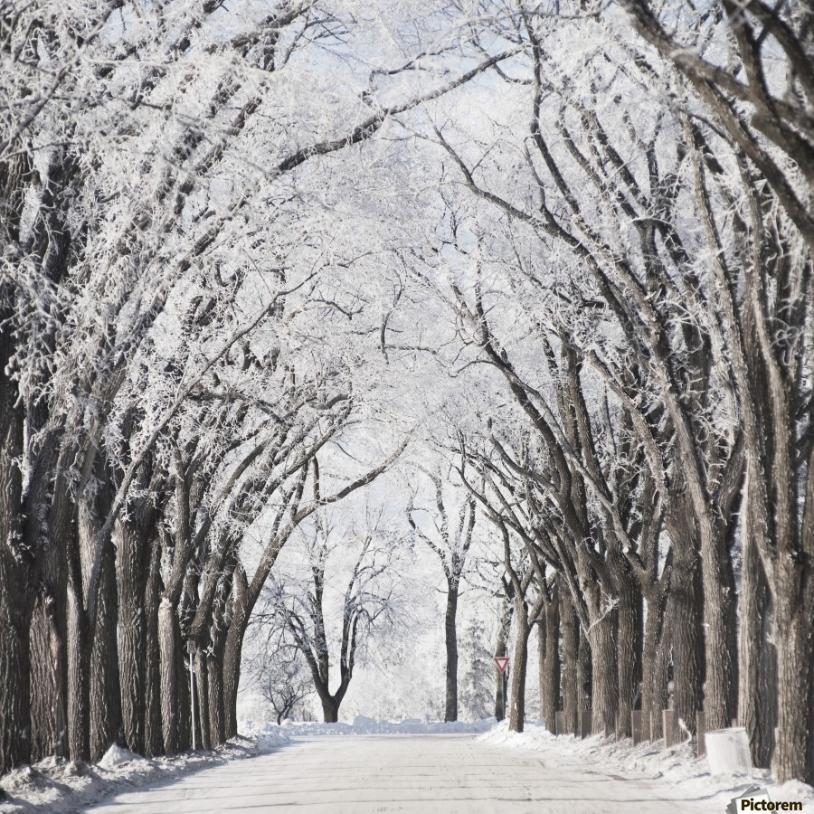 Winnipeg, Manitoba, Canada; A Road And Trees Covered In Snow In Winter  Print