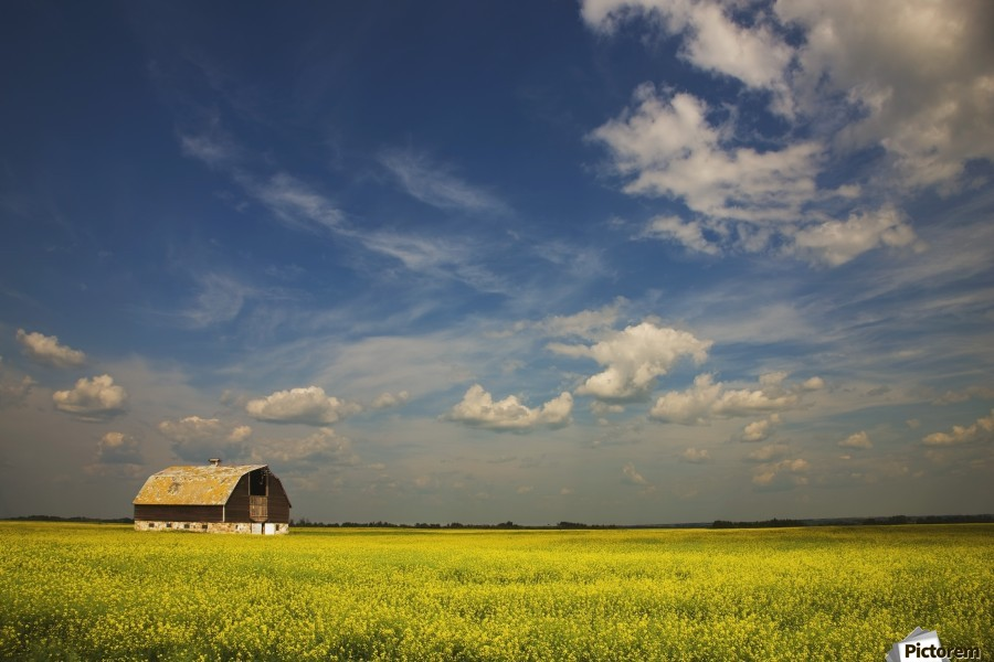 Alberta, Canada; An Old Barn In A Field  Print