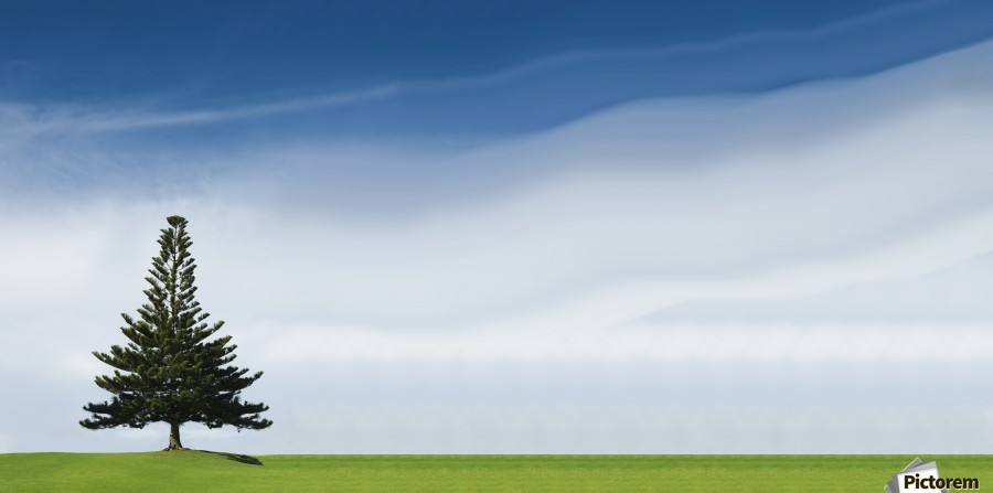 A Coniferous Tree Standing Alone In A Field  Print