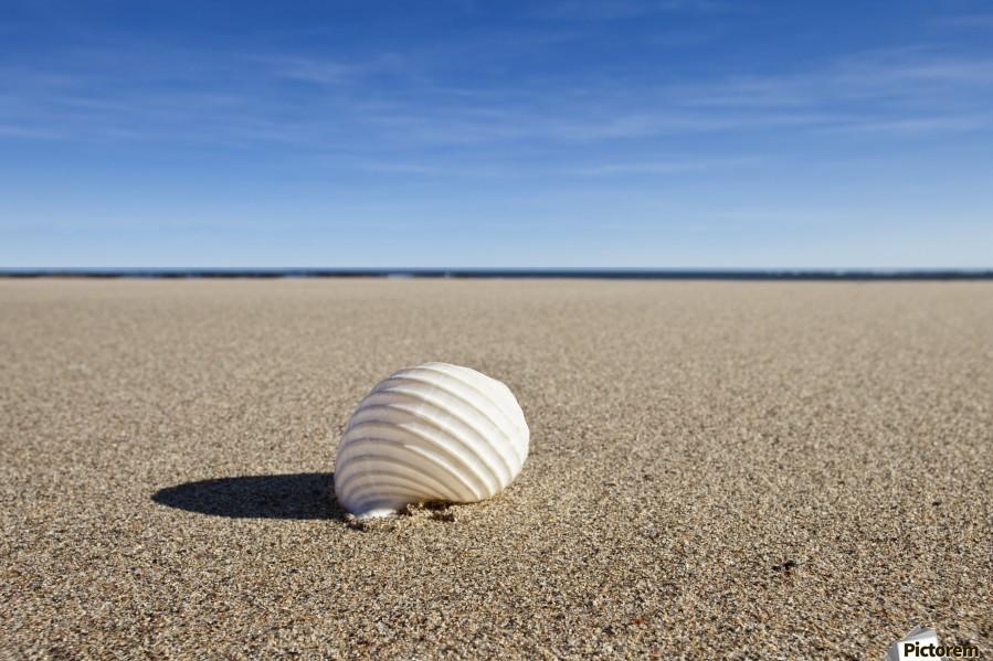 Northumberland, England; A Seashell On The Sand On Low Newton Beach  Print