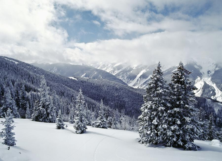 Snow Covered Pine Trees On Mountain Pacificstock Canvas