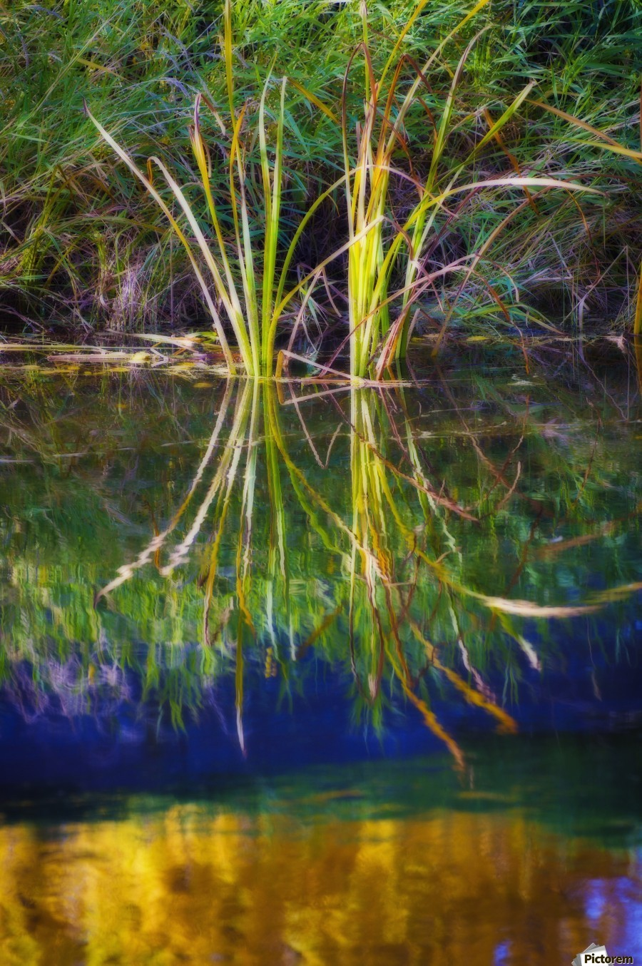 Reeds Reflecting On The Water; St. Albert, Alberta, Canada  Print