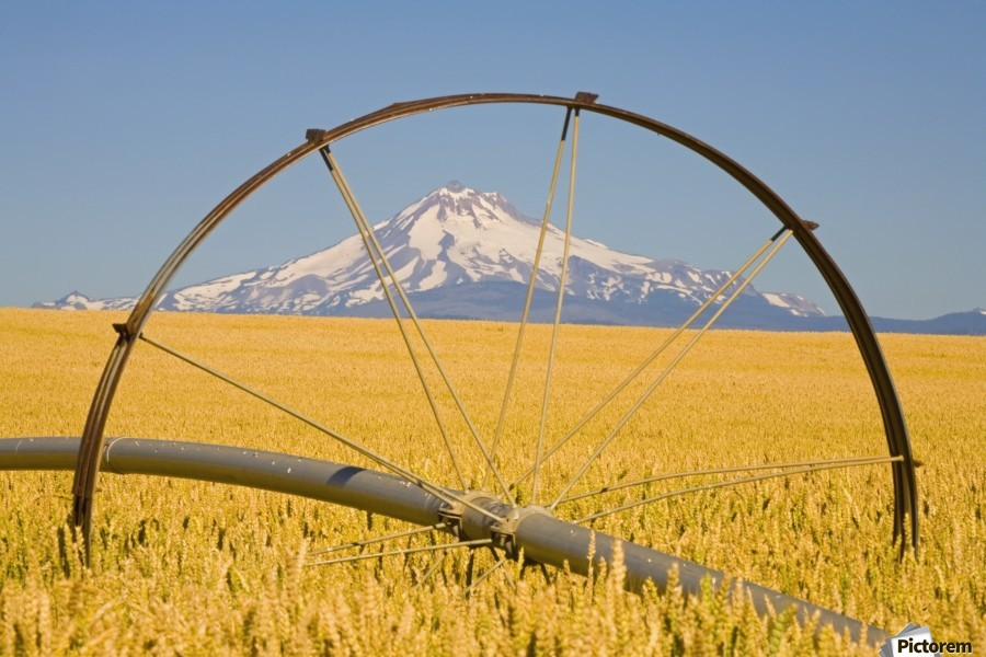 Irrigation Pipe In Wheat Field With Mount Hood In Background; Oregon, Usa  Print