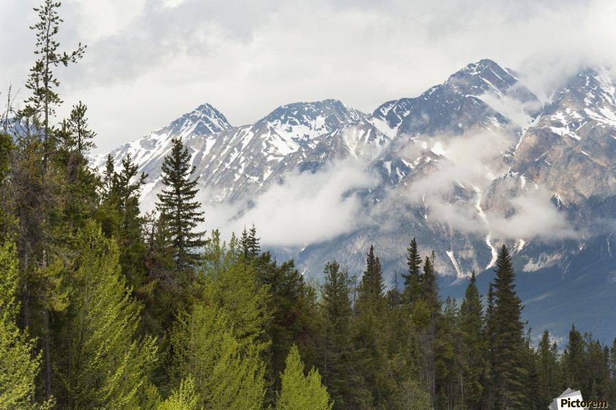 A Forest And The Rocky Mountains; Jasper, Alberta, Canada  Print
