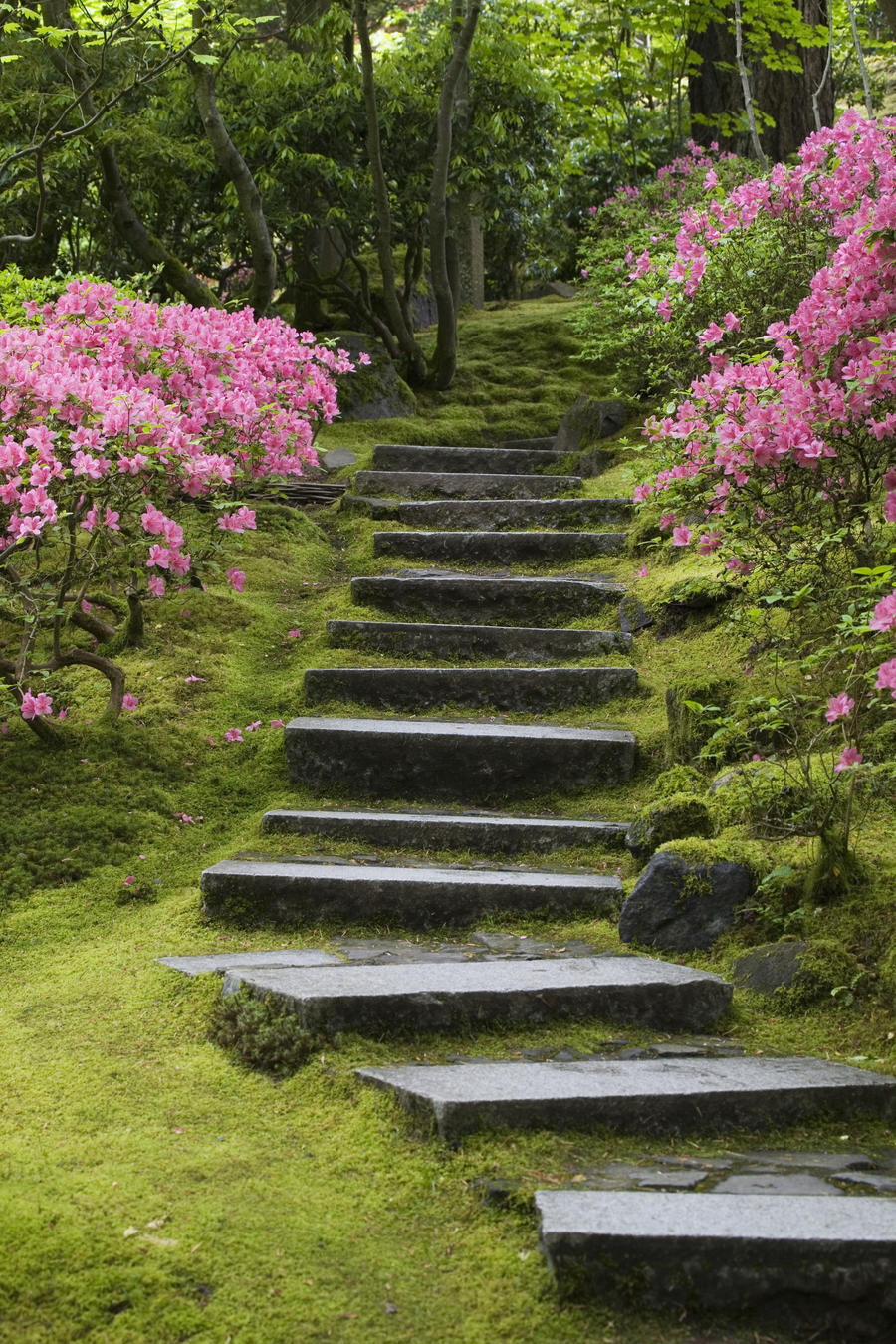 Rock Stairway Along A Moss Covered Hill With Flowering Bushes