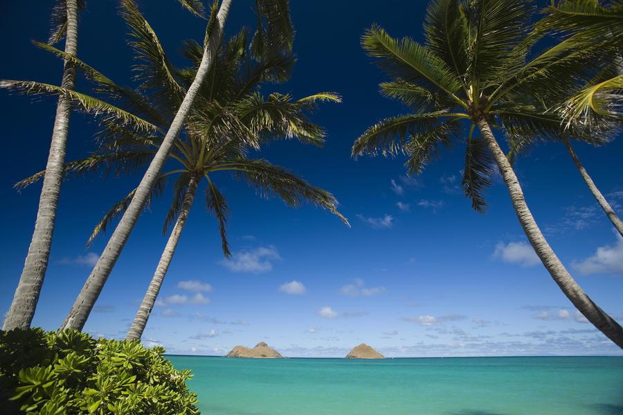 USA, Hawaii, Oahu, Palm tree over Pacific ocean with Mokulua island in background; Lanikai  Print