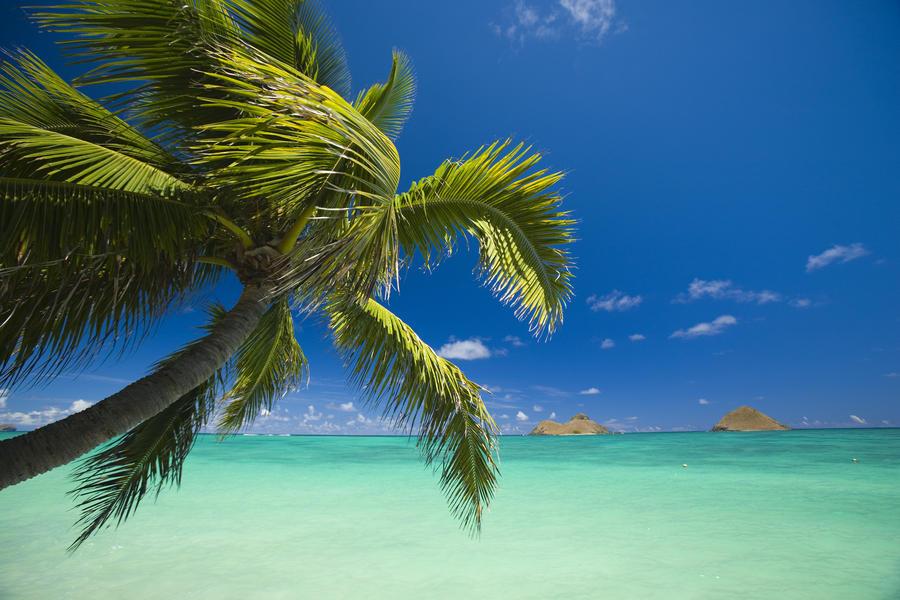 USA, Hawaii, Oahu, Mokulua island in background; Lanikai, Palm tree over Pacific Ocean  Print