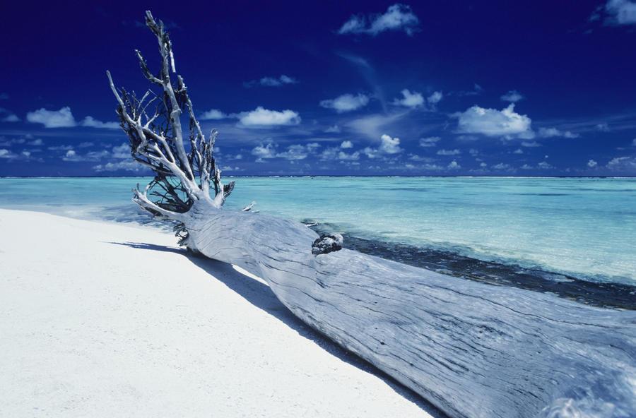Driftwood On White Sand Beach Canvas Print