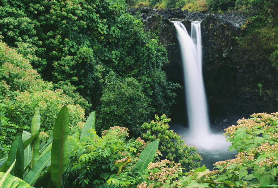 Hawaii, Big Island, Hilo, Wailuku River State Park, Rainbow Falls, Flowers And Greenery In Foreground.  Print