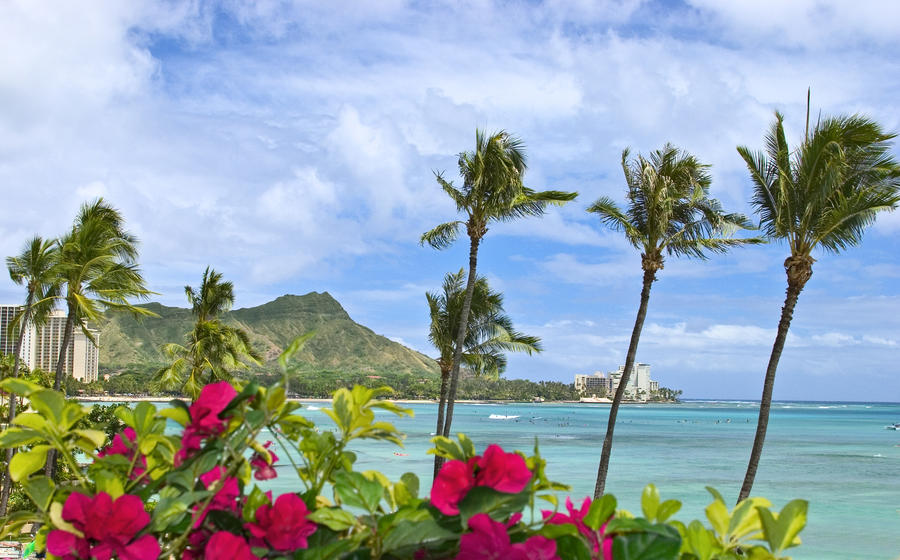 Hawaii, Oahu, Diamond Head, Waikiki, Palm Trees And Bougainvillea Foreground.  Print