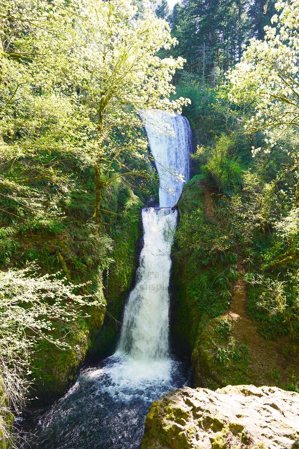 Falls in The Gorge 2   Columbia River Oregon  Print