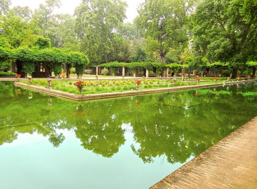 Lotos Pond - Estanque de Los Lotos - Parque de Maria Luisa - Seville Spain  Print