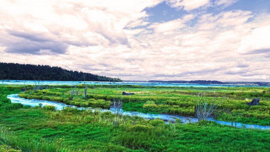 The Estuary in Fall  Print