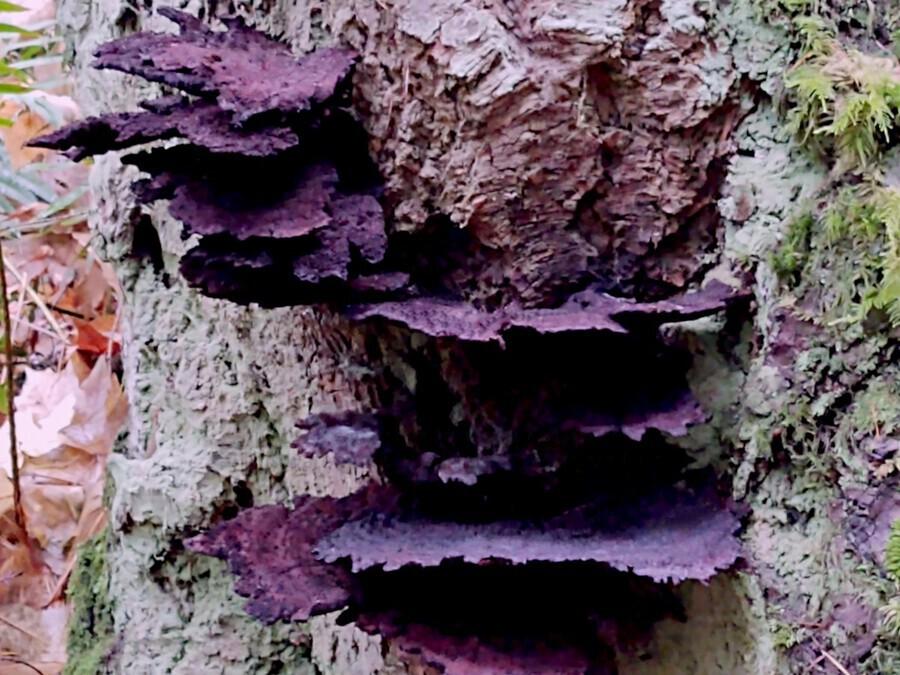 Tiny World 8 of 8 - Mushrooms and Fungi  Print