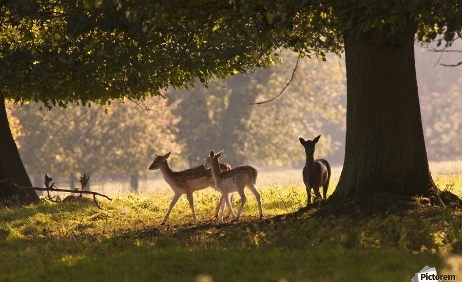 Deer Standing Under A Tree; North Yorkshire, England  Print
