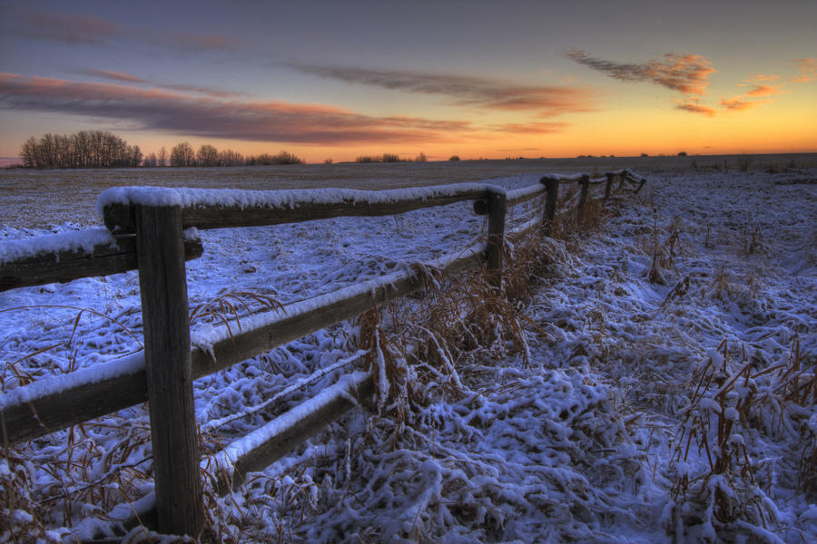 Early Morning Snow On A Cattle Fence, Rural Alberta  Print