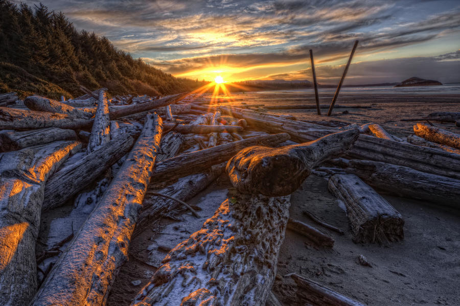 Sunrise Over The Logs At Long Beach, Pacific Rim National Park, British Columbia.  Print