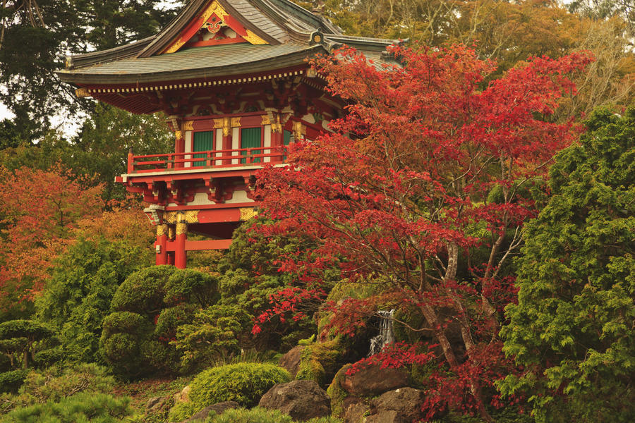 canvas print japanese tea garden in golden gate park san francisco - Golden Gate Park Japanese Tea Garden