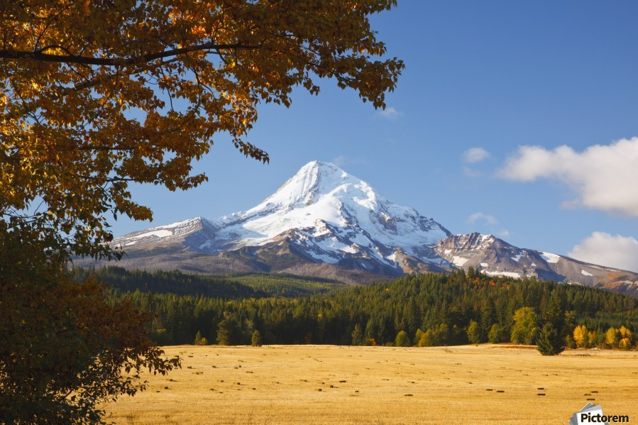 Mount Hood And Autumn Colours In Hood River Valley; Oregon, United States of America  Print