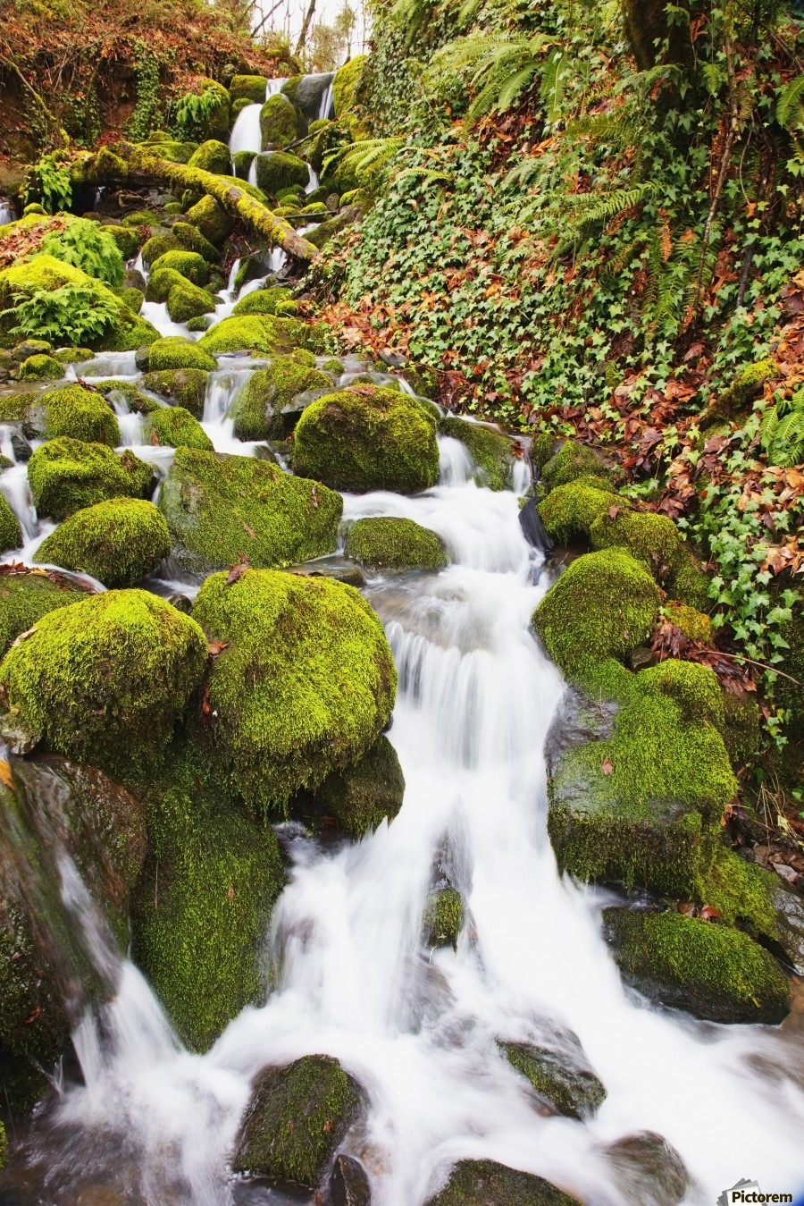 Green moss along small waterfall;Happy valley oregon united states of america  Print