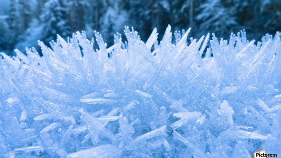 Close Up Of Hoar Frost Along The North Fork Of The Nooksak River During Winter, Mount Baker National Forest, Washington, Usa  Print