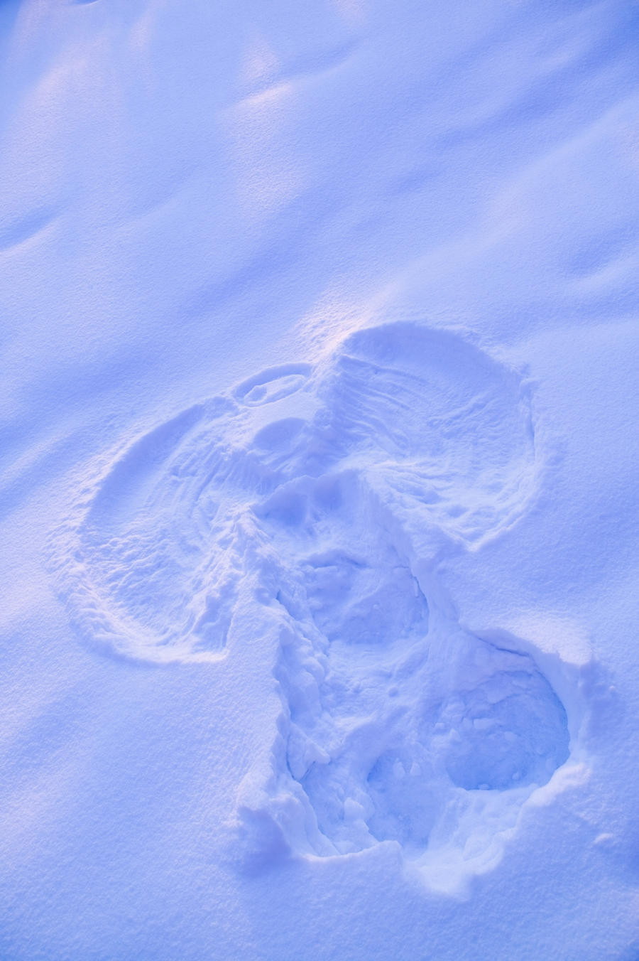Close Up Of Snow Angel At Sunset With Blue And Pink Highlights Winter Fairbanks Interior Alaska  Print