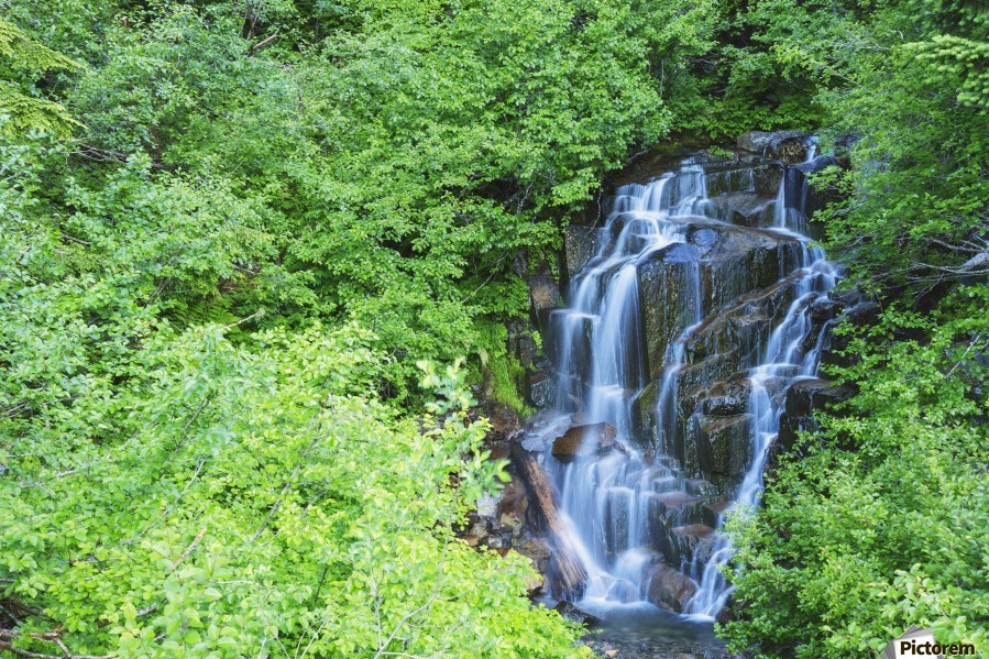 Stevens creek waterfall mount rainer national park near seattle;Washington united states of america  Print