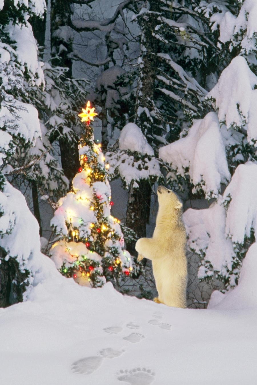 polar bear cub standing on hind legs looking star on christmas tree in forest alaska winter composite - Bear Christmas Tree