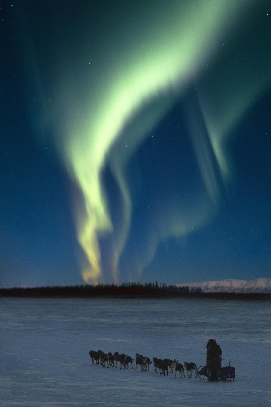 scenic view of musher with northern lights overhead alaska winter