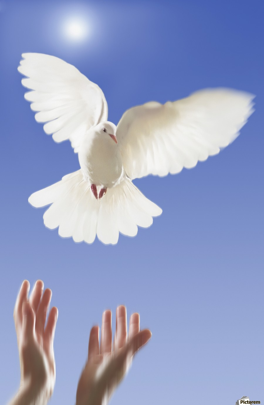 Hands Releasing White Dove Vancouver British Columbia