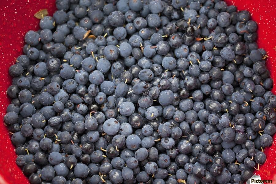 A bowl of blueberries;Alaska united states of america  Print
