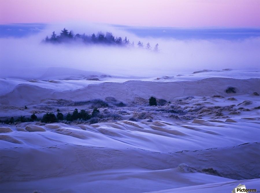 Fog over the sand dunes at dawn after a heavy frost; Lakeside, Oregon, United States of America  Print
