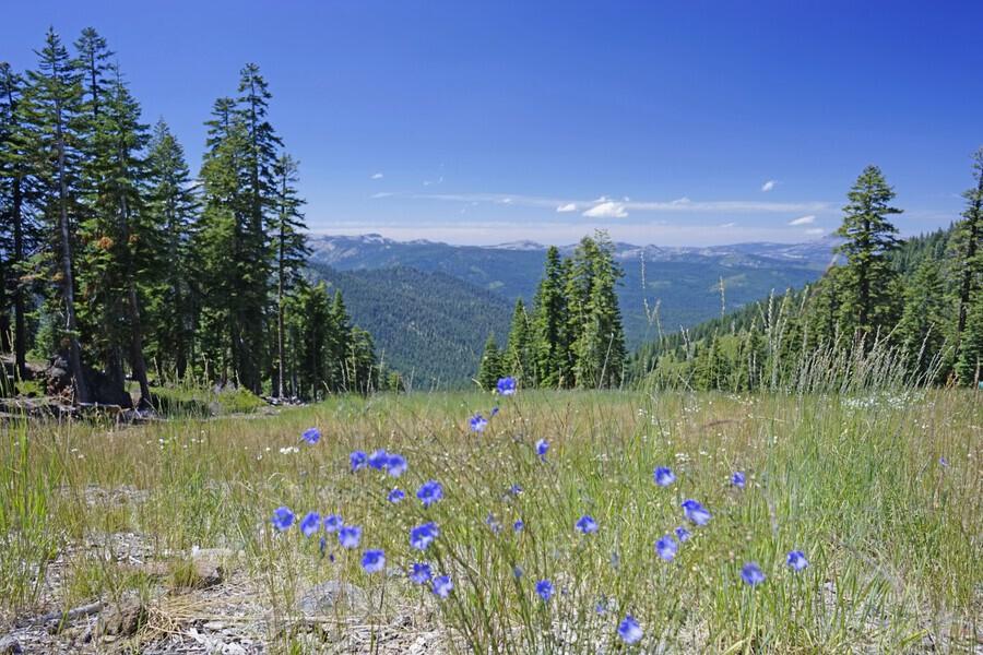 Sierra Nevada in Spring 7 of 8  Print