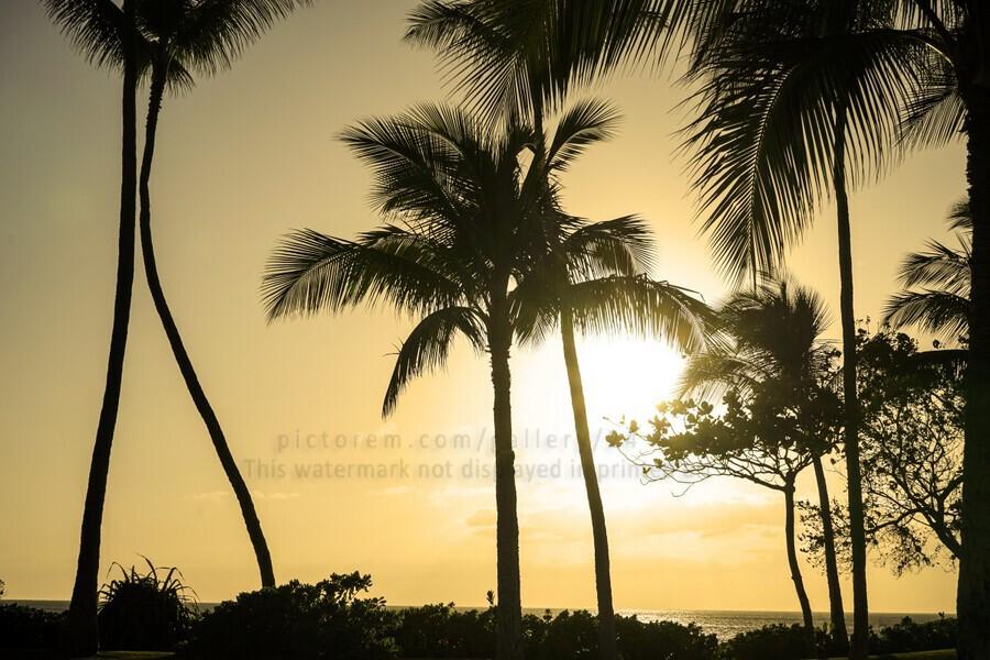 Through the Palms  Print