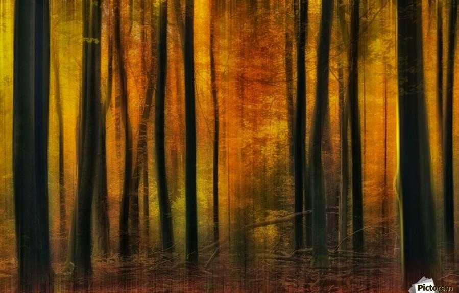 Autumn falls  Print