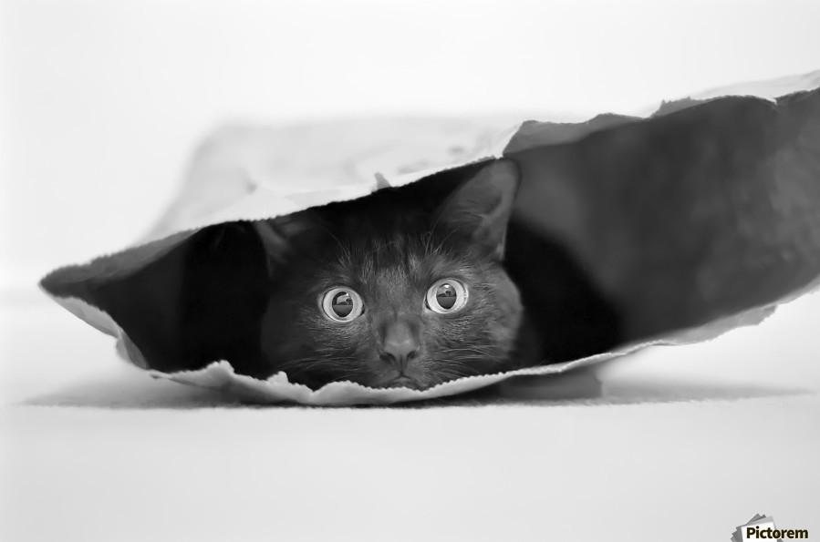 Cat in a bag  Print
