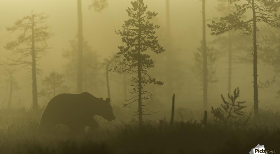Morning Fog  Print