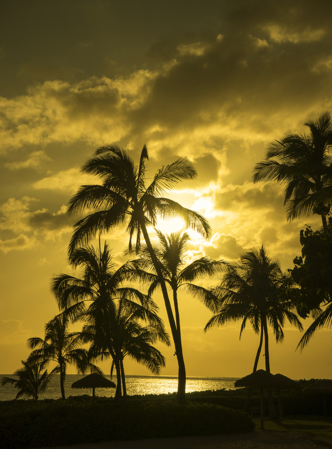 Palms and Hulu Thatched Tiki Umbrellas in the Golden Light of Sunset  Print