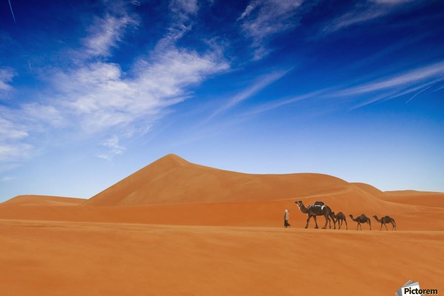 Desert Life ..  Print