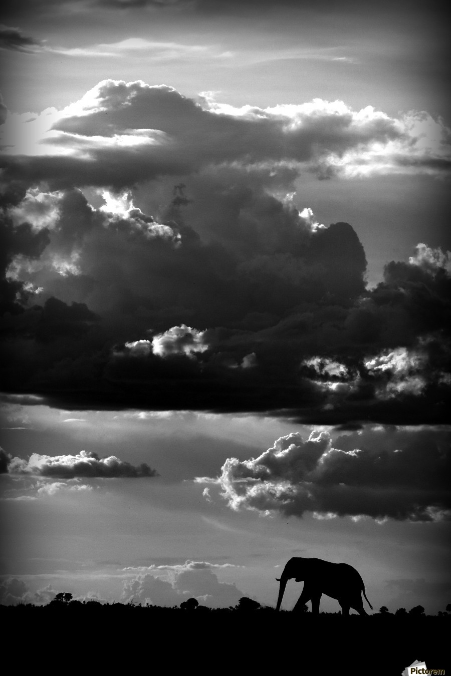 He walks under an African Sky by WildPhotoArt    Print
