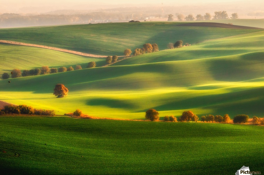 Green fields  Print